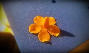 erste Lage Blütenblätter um den Rosenkopf